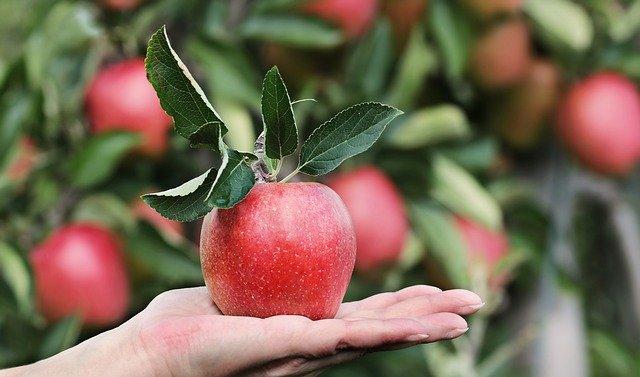 Низко висящие фрукты